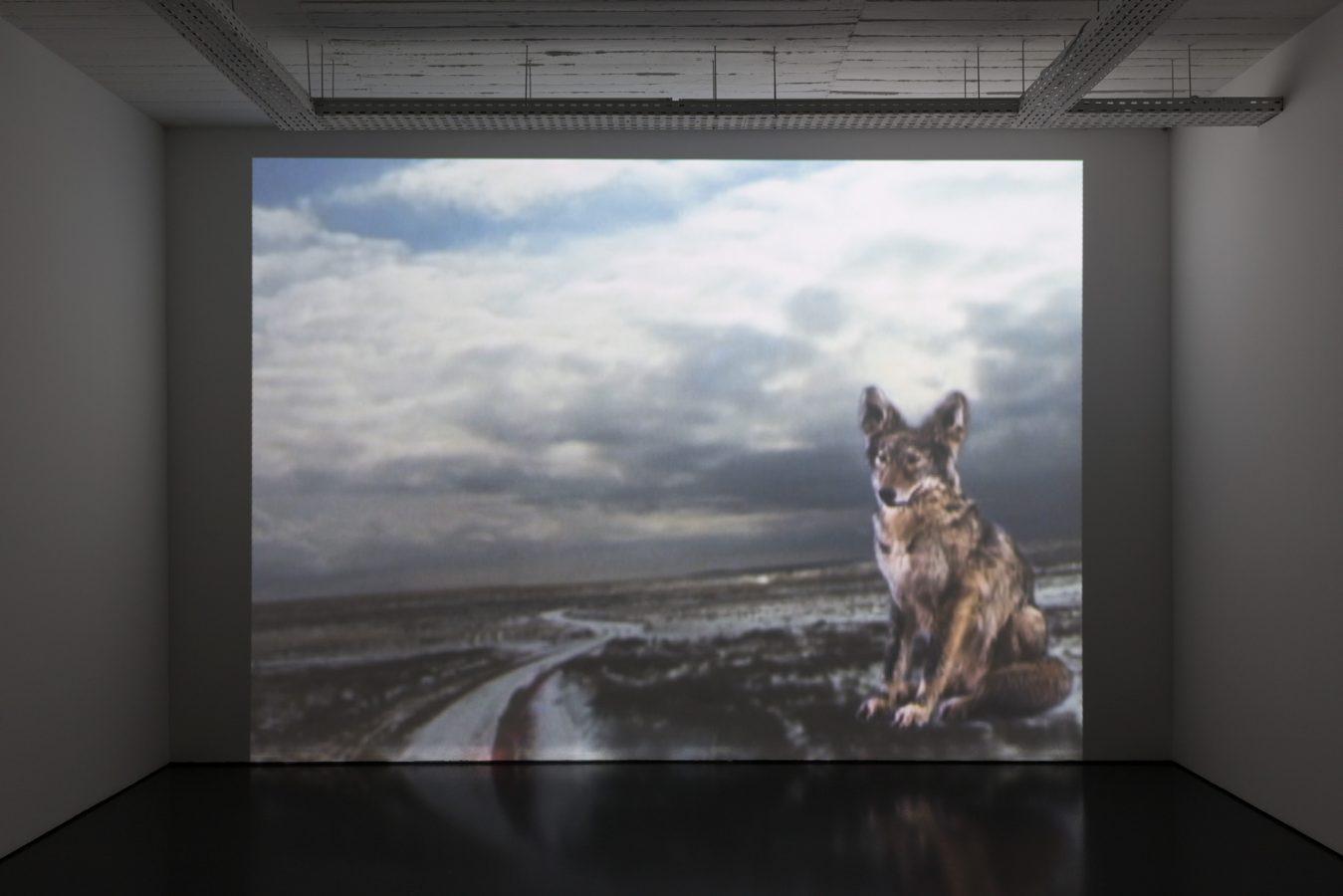 Galeria Pedro Cera –  Adam Pendleton  & Joan Jonas -